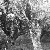 Helena Gorey: The Orchard |  Butler Gallery  Kilkenny Castle Kilkenny | Saturday 9 March to Sunday 21 April 2013 | to