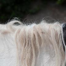 Horse Drawn |  Gallery of Photography  Meeting House Square Temple Bar, Dublin 2 | Wednesday 29 January to Sunday 9 February 2014 | to