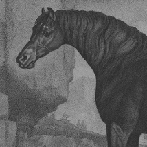 Horse |  VOID  Patrick Street Derry BT48 7EL | Saturday 21 February to Saturday 18 April 2015 | to