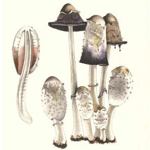 Mushroom Book |  Limerick City Gallery  Pery Square, Limerick | Friday 3 April to Friday 15 May 2015 | to