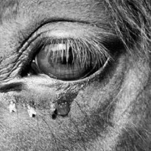 Special Screening of 'The Turin Horse' in partnership with CCA |  VOID  Patrick Street Derry BT48 7EL | Wednesday 4 March 2015 | to