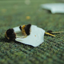 Bridget O'Gorman: Telling the Bees |  Galway Arts Centre  47 Dominick Street Galway | Saturday 29 August to Saturday 3 October 2015 | to