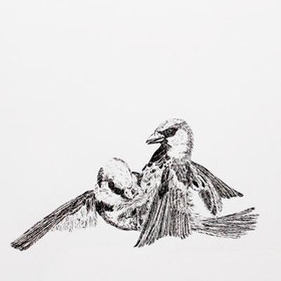 Nick Jarman: Formerly Wildlife | Wexford Arts Centre  Cornmarket Wexford | Saturday 15 October to Saturday 12 November 2016 | to